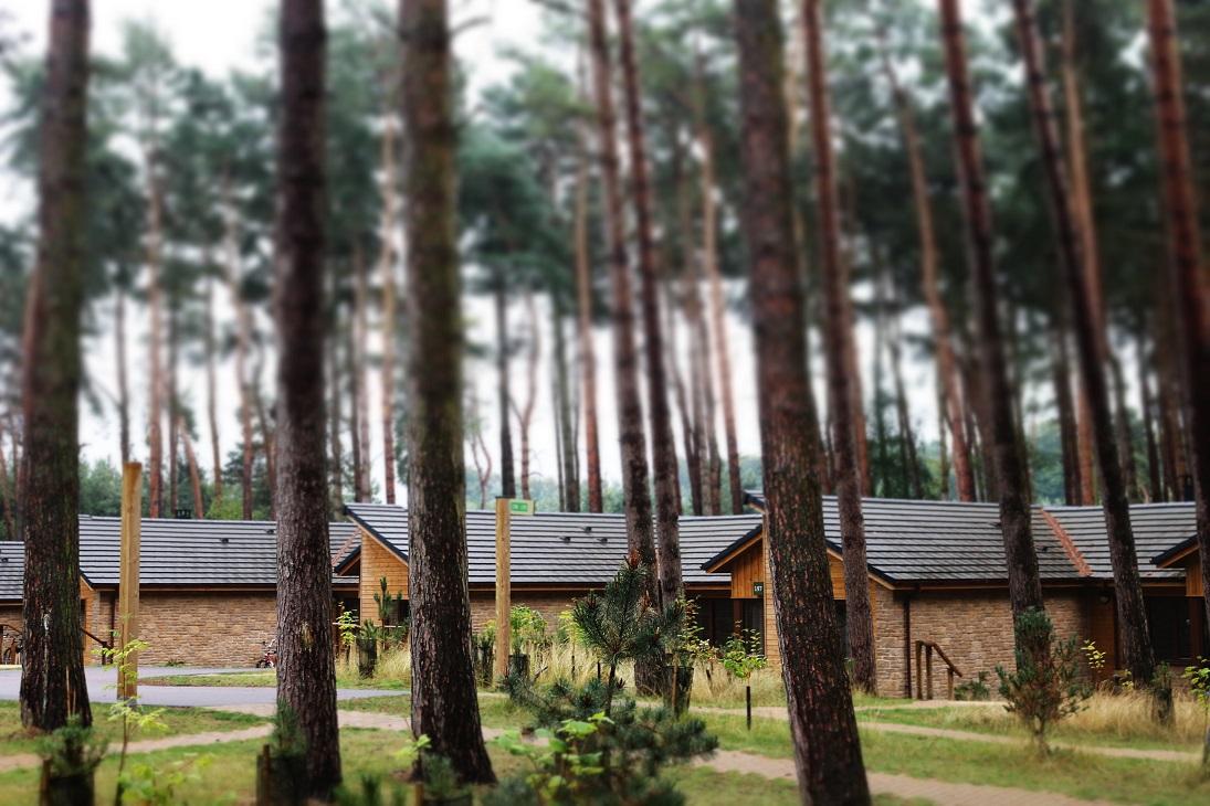 forest centre parcs woburn