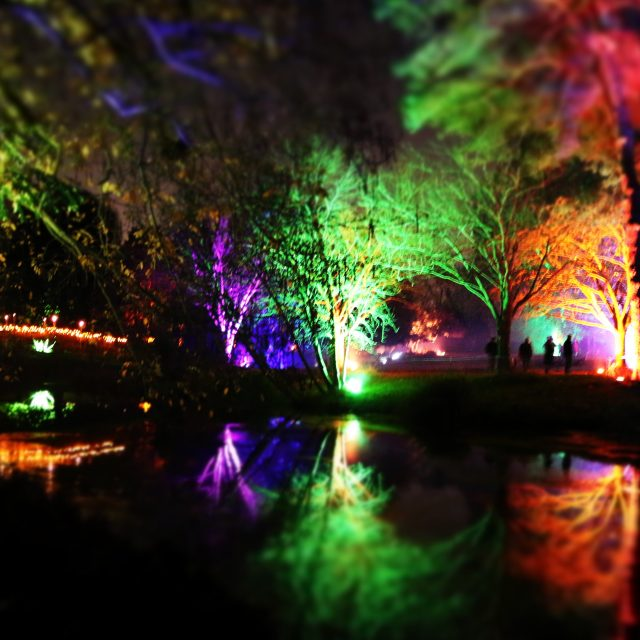 The Enchanted Woodland at Syon Park